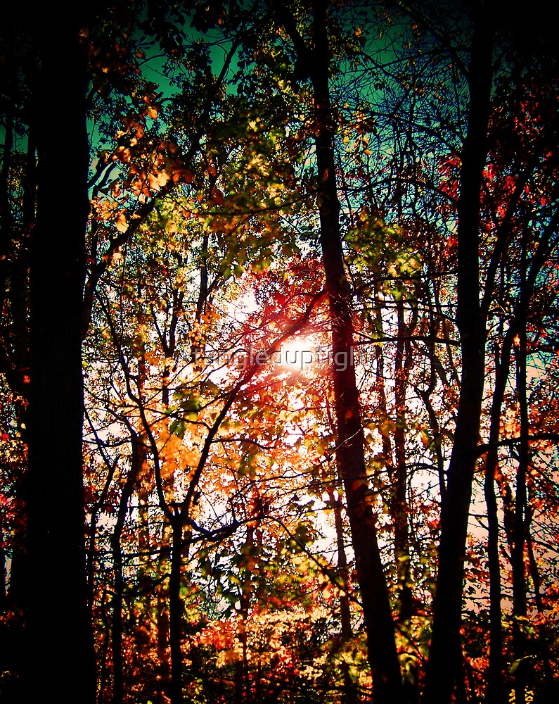 Forest Sun by tangleduptight