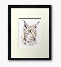 Lynx Colored Pencil Drawing Framed Print