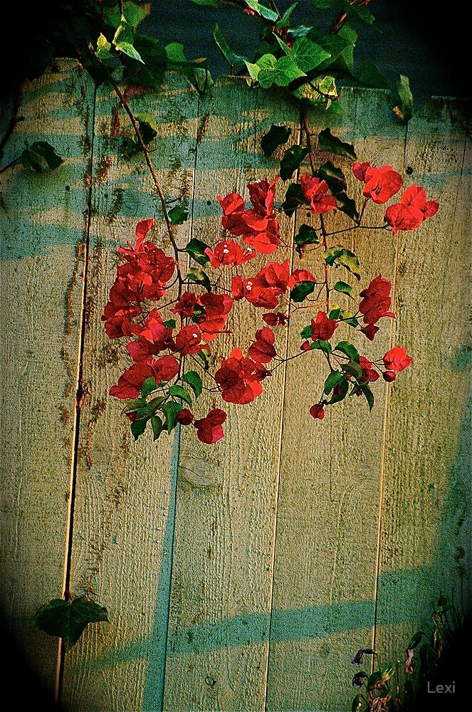 Flowers On Fence Late Afternoon by Lexi