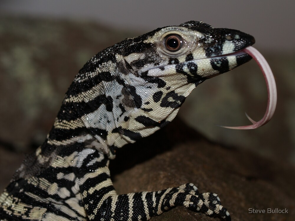 I smell you - Lace Monitor  by Steve Bullock