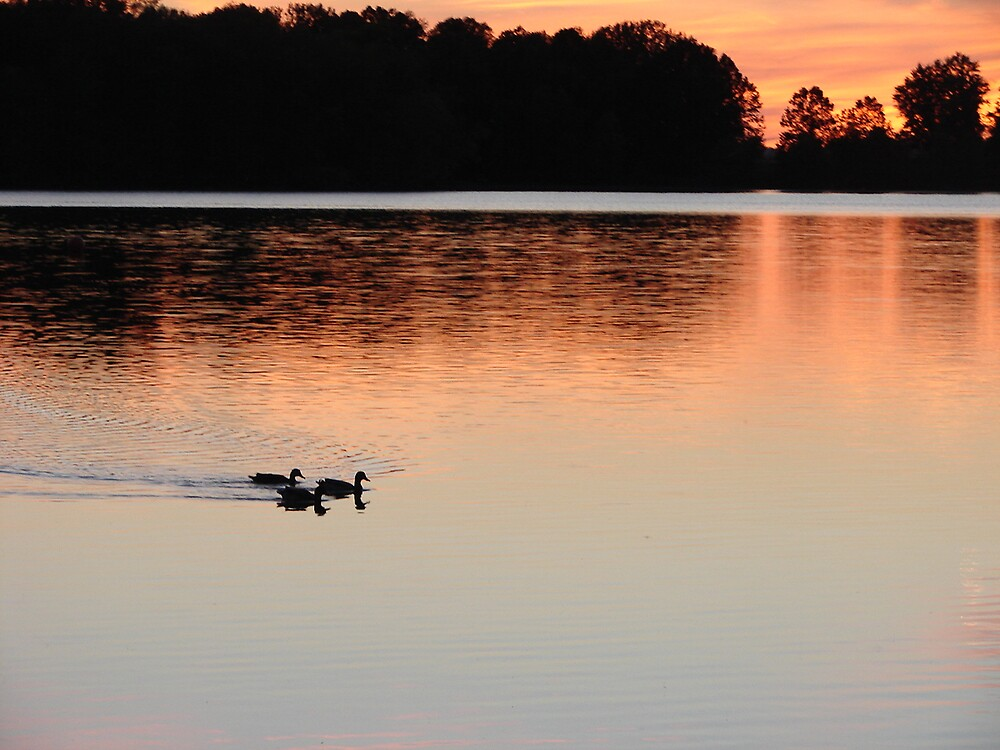 Sunset Ducks by inventor