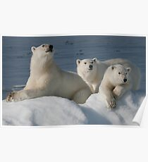 Bears On Ice Poster