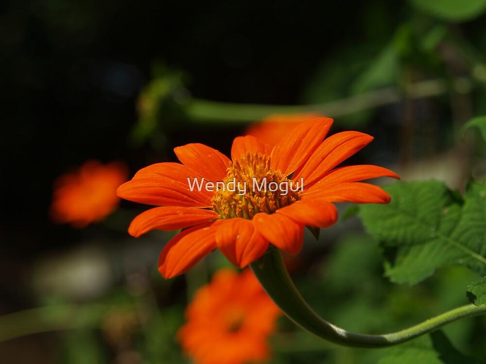 Pretty Orange  by Wendy Mogul