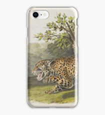John James Audubon - Felis Onca, Linn. The Jaguar. Female (1846) iPhone Case/Skin