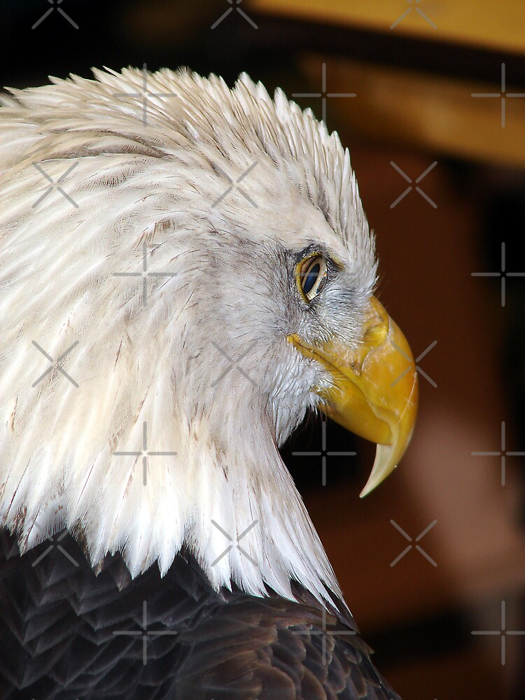 Eagle Head by angelandspot