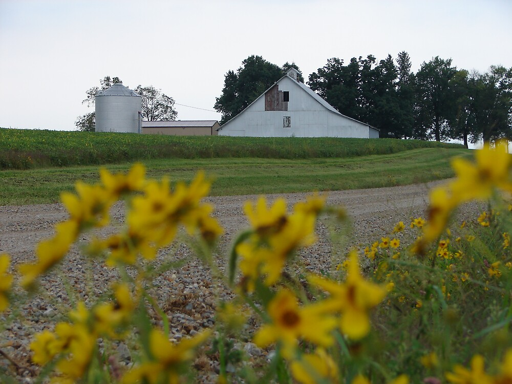 Yellow flowers White Barn by inventor