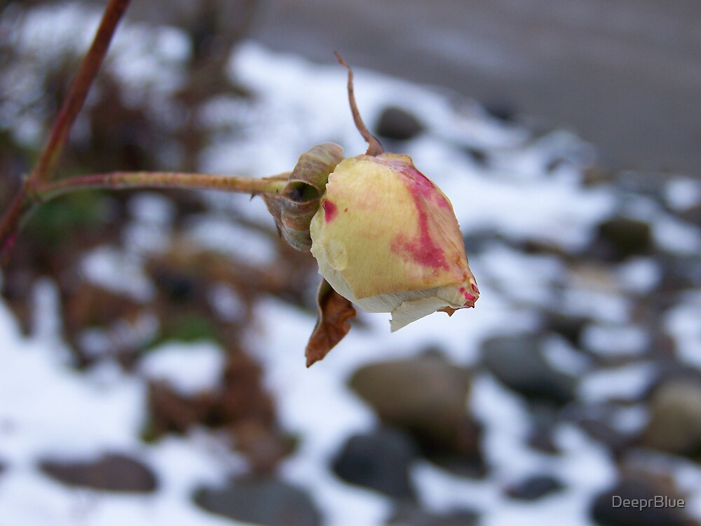 The Thaw 8 & the Rose That Won't Live or Die by DeeprBlue