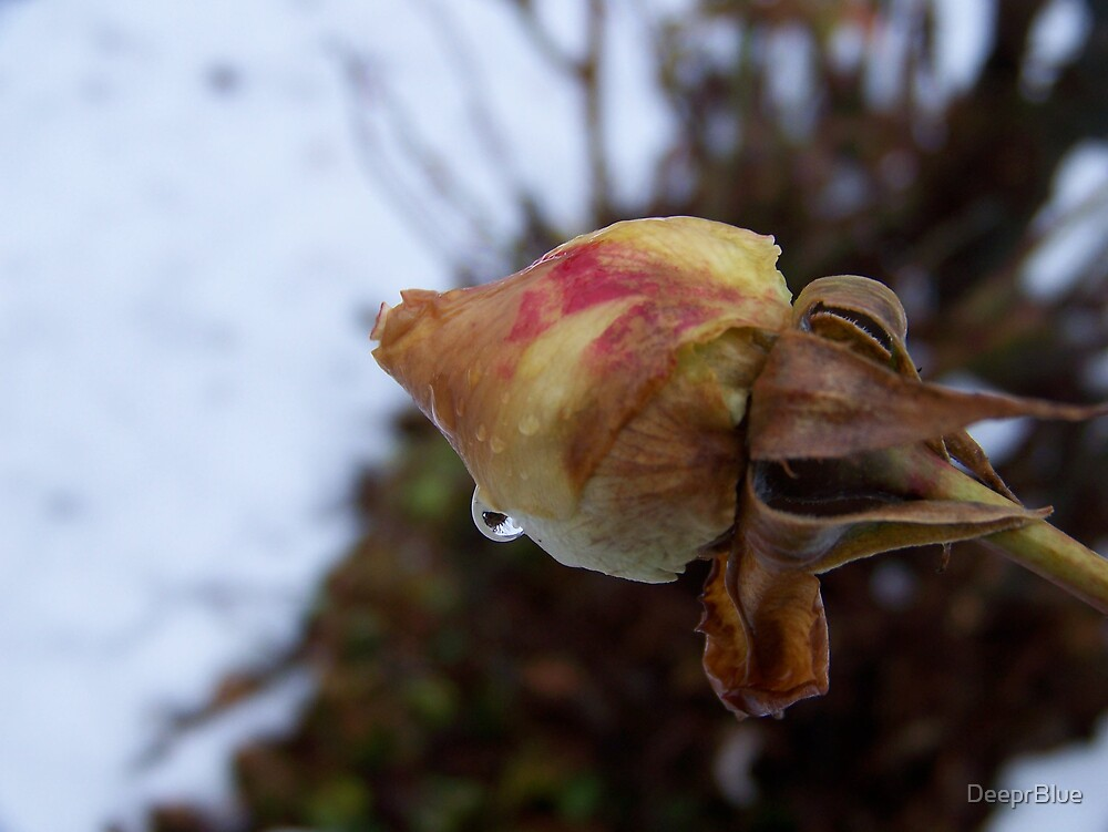 The Thaw 10 & the Rose That Won't Live or Die by DeeprBlue