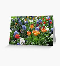 Colourful Array of Tulips and Hyacinths - Keukenhof Gardens Greeting Card