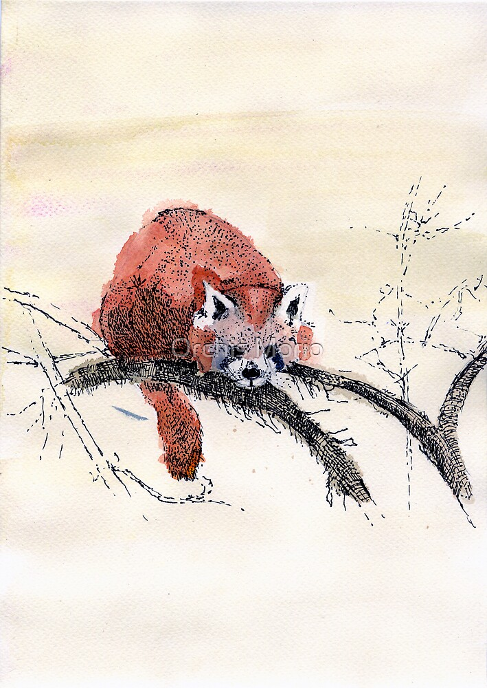 Red Panda by Orchis Morio
