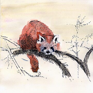 Red Panda by Lisa1