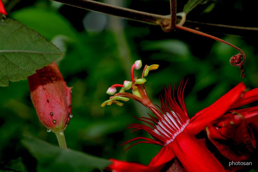Curious Flower by photosan