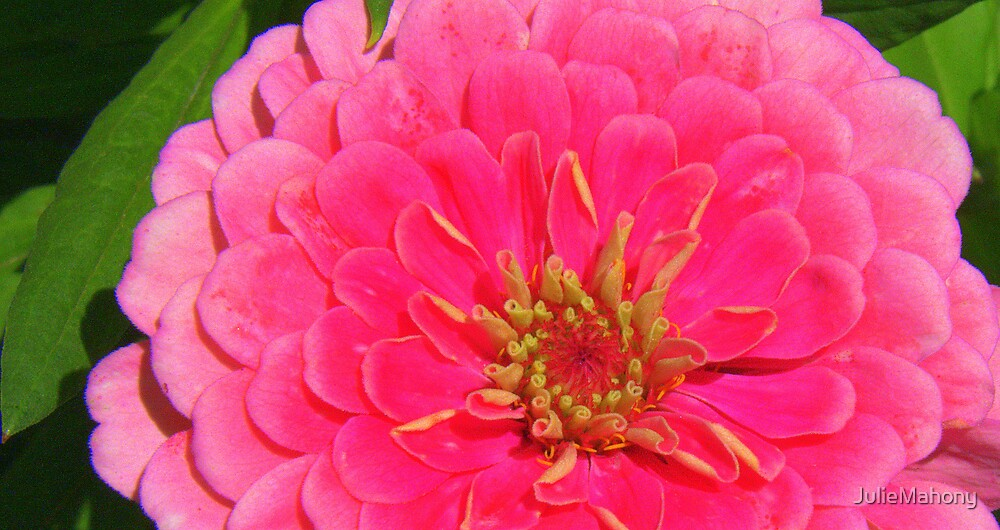 Fluro Flower by JulieMahony