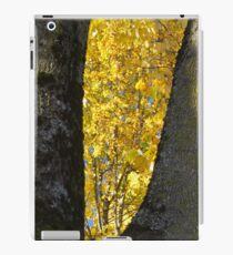 Framing the Maples   iPad Case/Skin