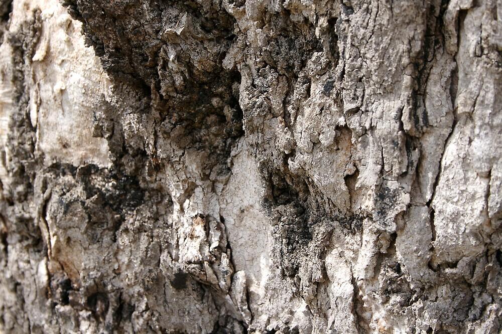 Tree Bark by lewildbeast