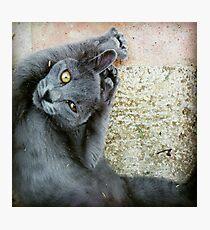 Gray Cat Photographic Print