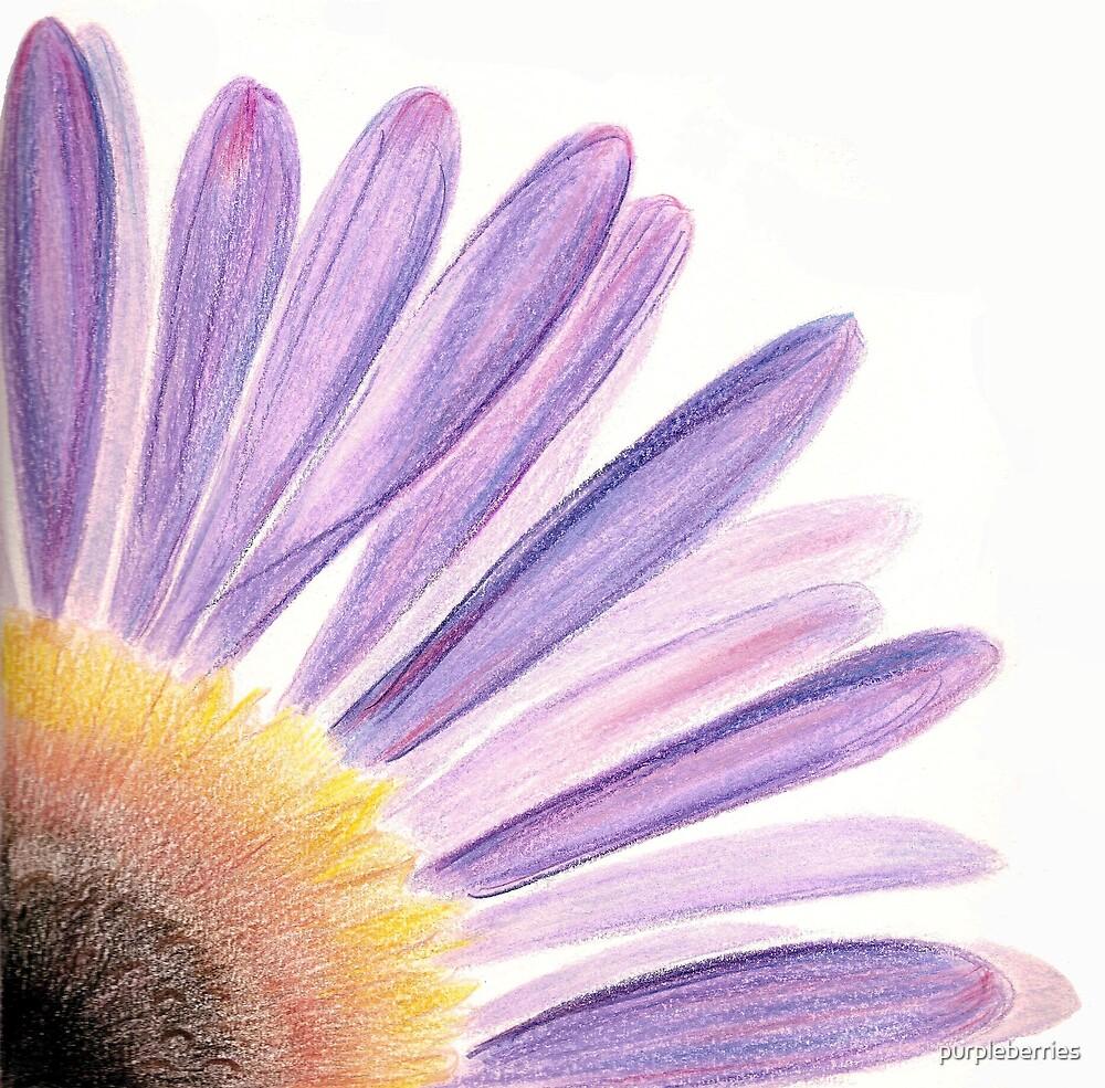 Seaside Daisy by purpleberries