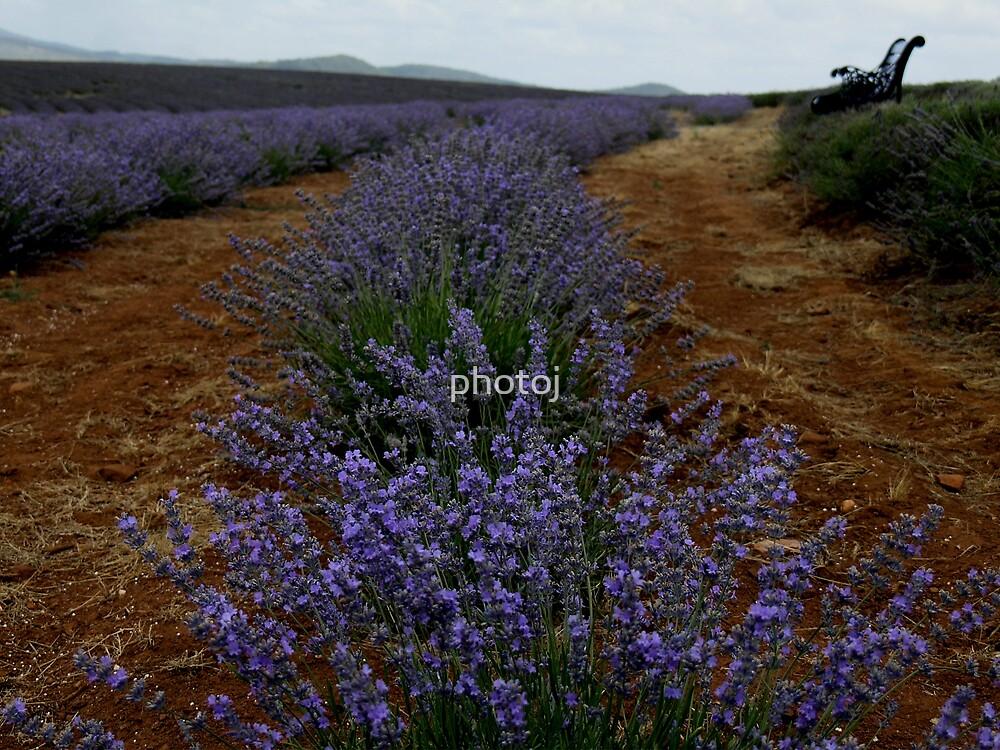 photoj Tas, Lavender Farm by photoj