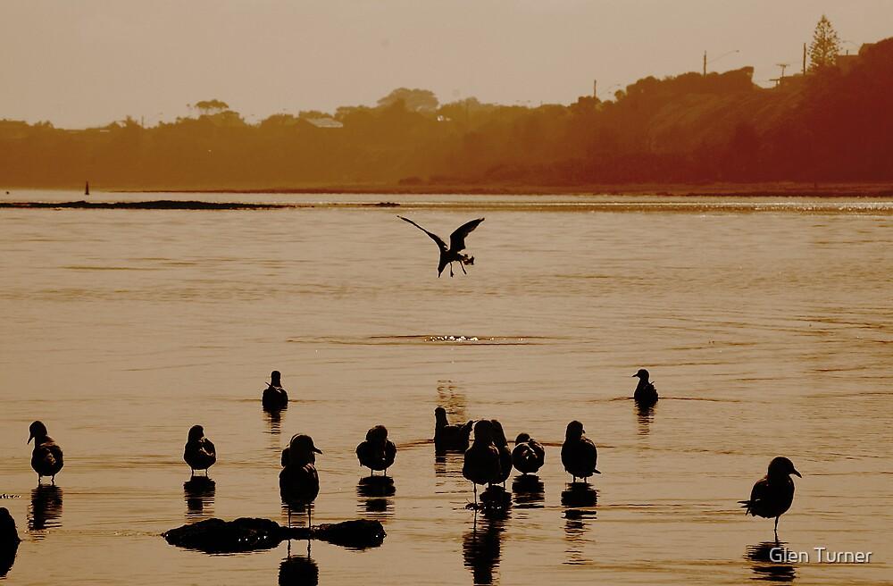 Diving Seagull by Glen Turner
