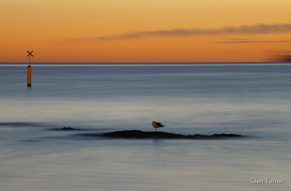 Seagull at Sunset by Glen Turner