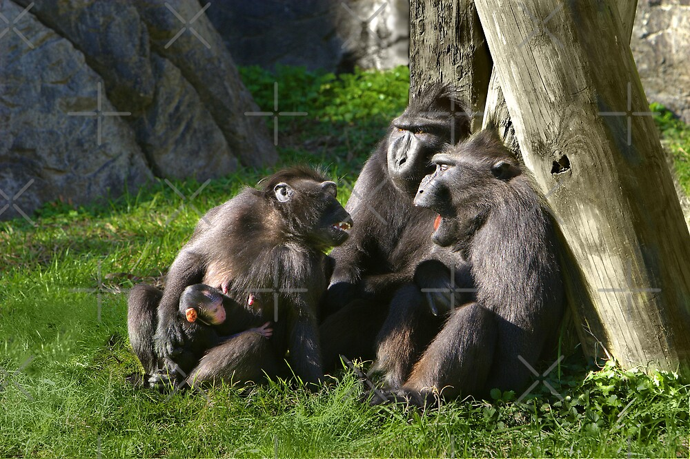Family Time by Lisa Putman