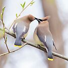 Love is in the air by MIRCEA COSTINA