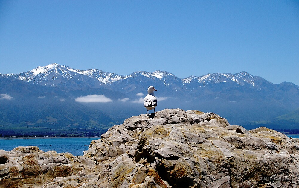 Seagull with mountains by Glen Turner