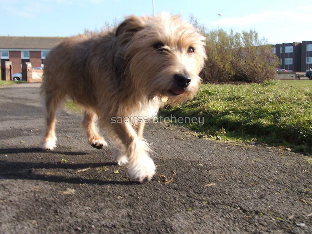 Toby in motion. by saoirse breheney