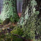 Lichen by Kristen Swanson