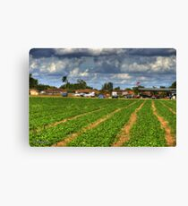 Stawberry Fields Canvas Print