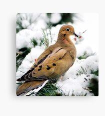Winter Bird Dove Square Canvas Print
