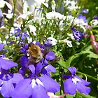 Bee on a flower by Tony Blakie