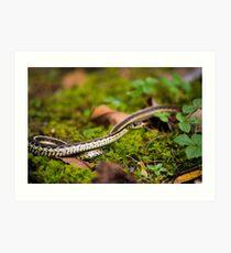 Slithering Snake Art Print
