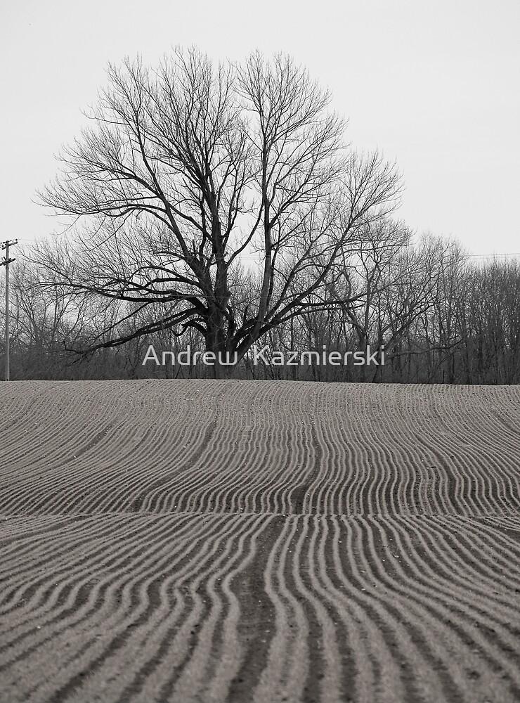 Field and Tree B&W by andykazie