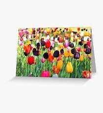The Season Of Tulips Greeting Card