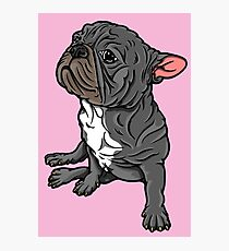 Side Sit French Bull Terrier Photographic Print