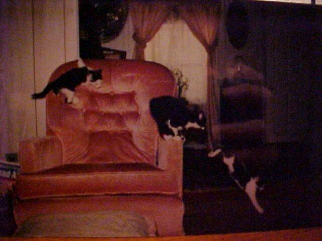 Kitten Circus by Littlewing