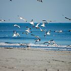 Seagull Frenzy by TJ Baccari Photography