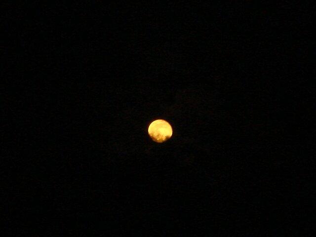 Moon Light by Dario  da Silva