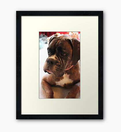 Weihnachtstagesportrait - Boxer-Hunde-Reihe Gerahmter Kunstdruck