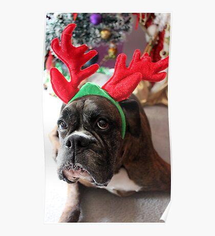 Rentier dieses Jahr? ...... Alles für dieses Plätzchen! - Boxer-Hunde-Reihe Poster