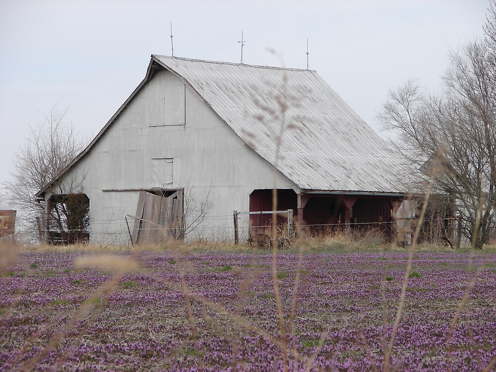 White Barn Purple field by inventor