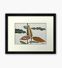 fresh Branch bay leaves Framed Print