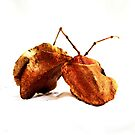 Seed Pods Still Life by Evita