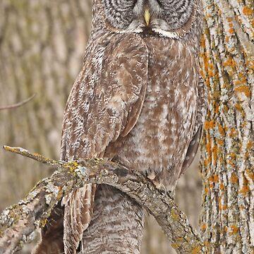 Camouflage-an owl's best friend by locustgirl