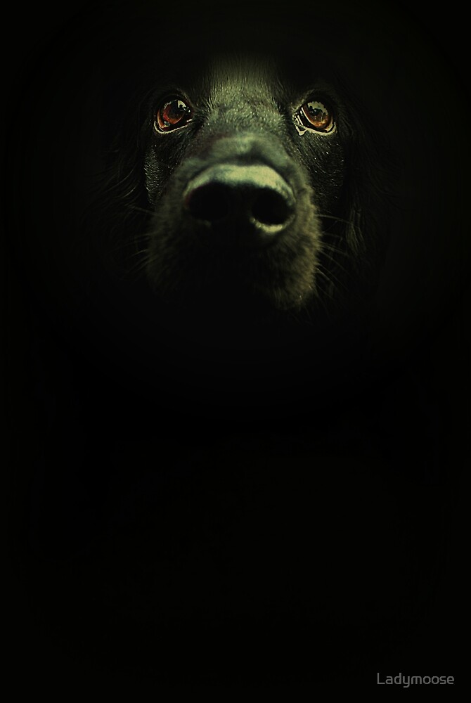 Dark Moods by Ladymoose
