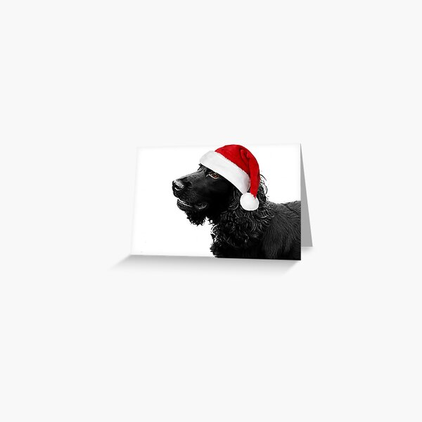 Merry Christmas Cocker  Greeting Card