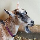 Goatee by Monnie Ryan