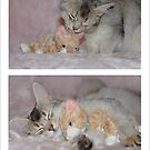 Motherly love by sarahnewton