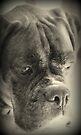 Warten auf meine Treat - Boxer Dogs Series von Evita